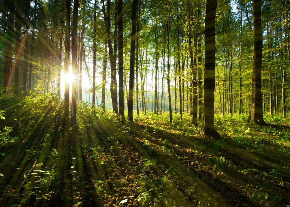 Holz und Klimaschutz - Wald